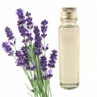Essential Oil Lavender 20ml