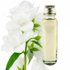 Essential Oil Jasmine 20ml