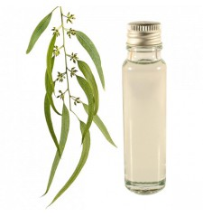essential oil eucalyptus