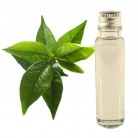 essential oil green tea