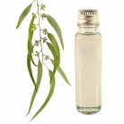 Essential Oil Eucalyptus 20ml